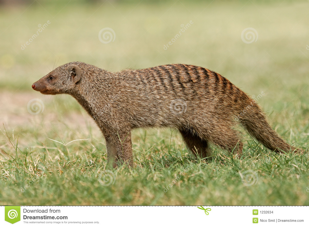 Mongoose unido