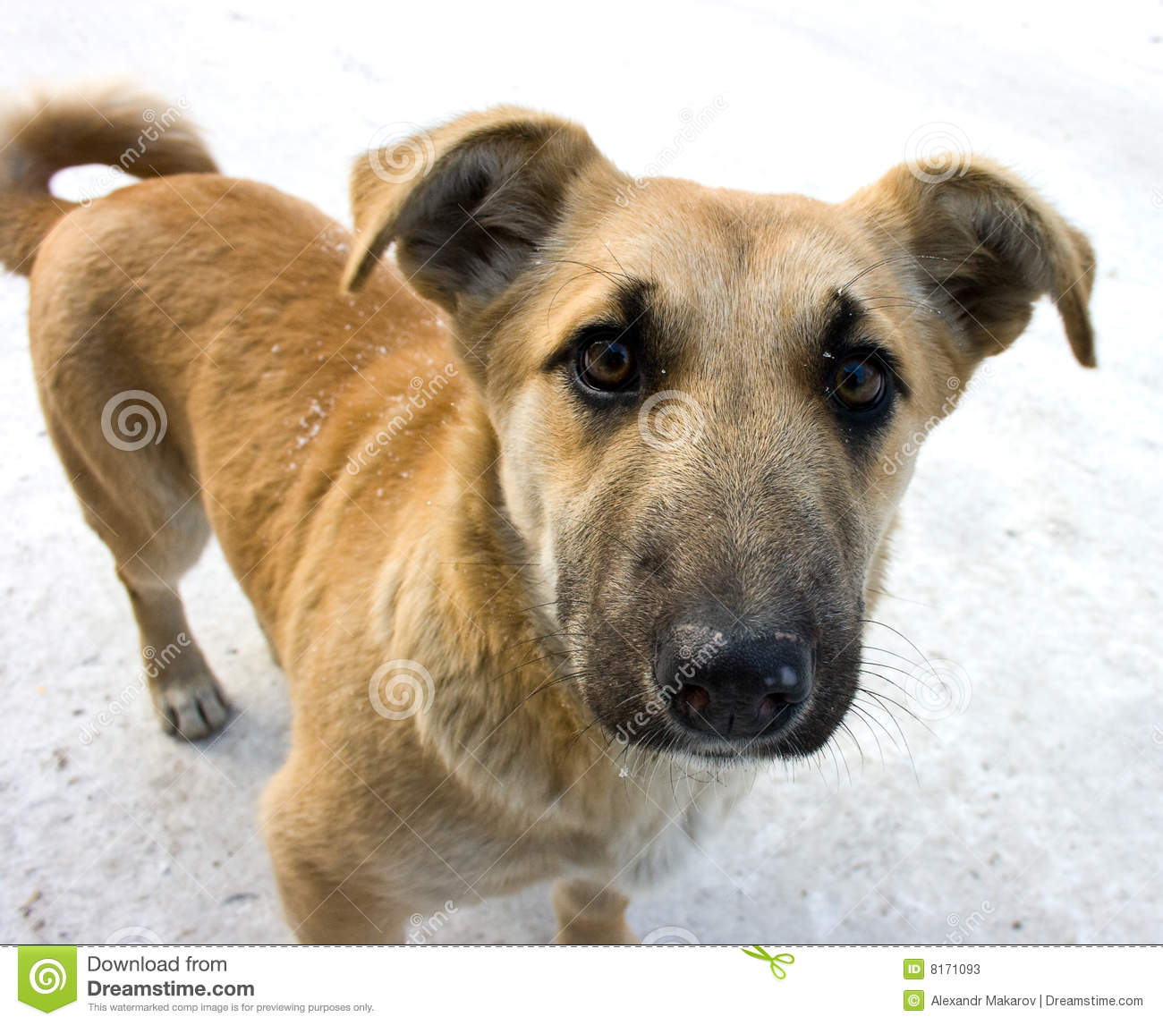 Mongrel Dog Stock Photos - Image: 8171093