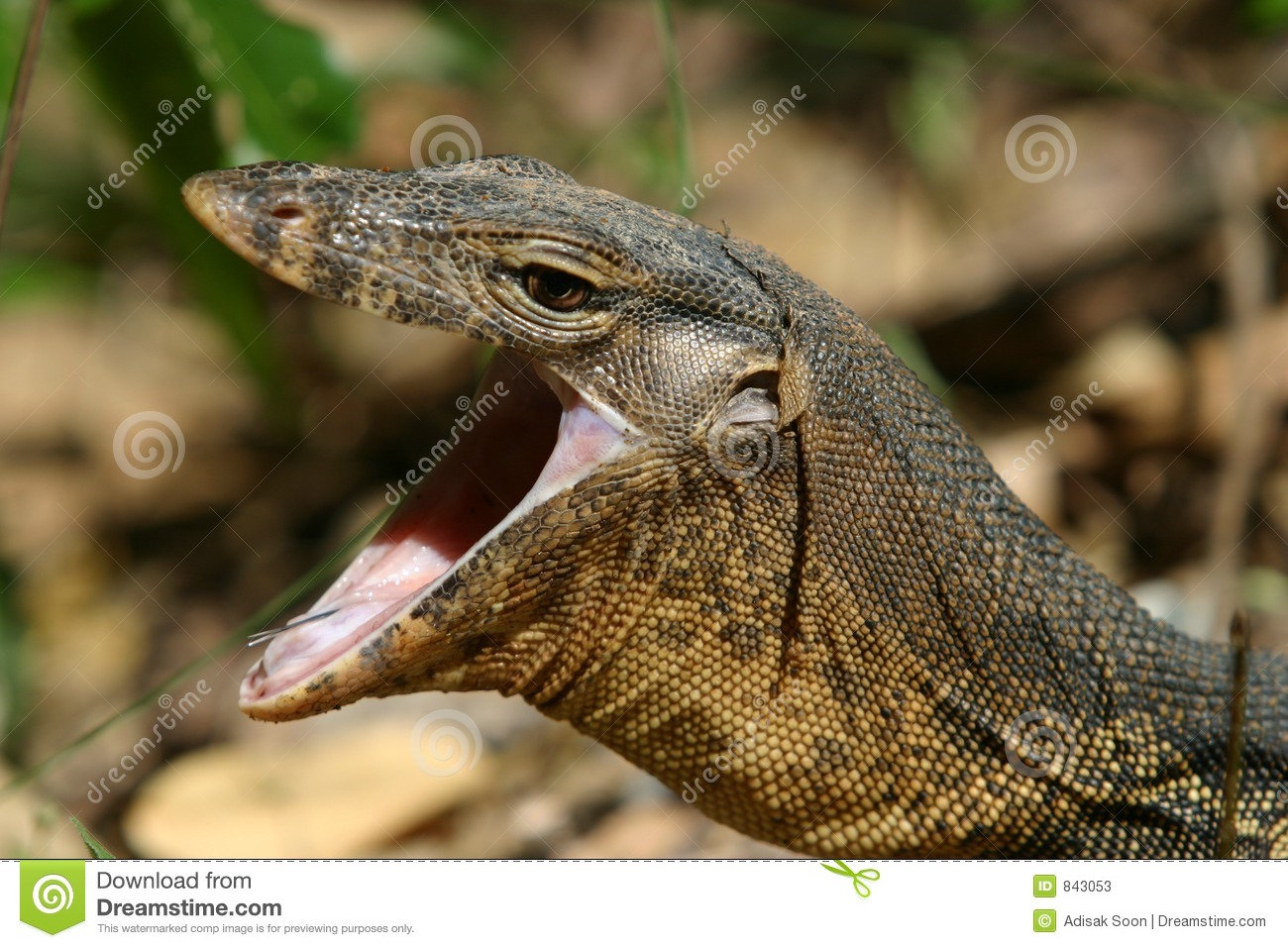 Monitor Lizard Stock Photos - Image: 843053