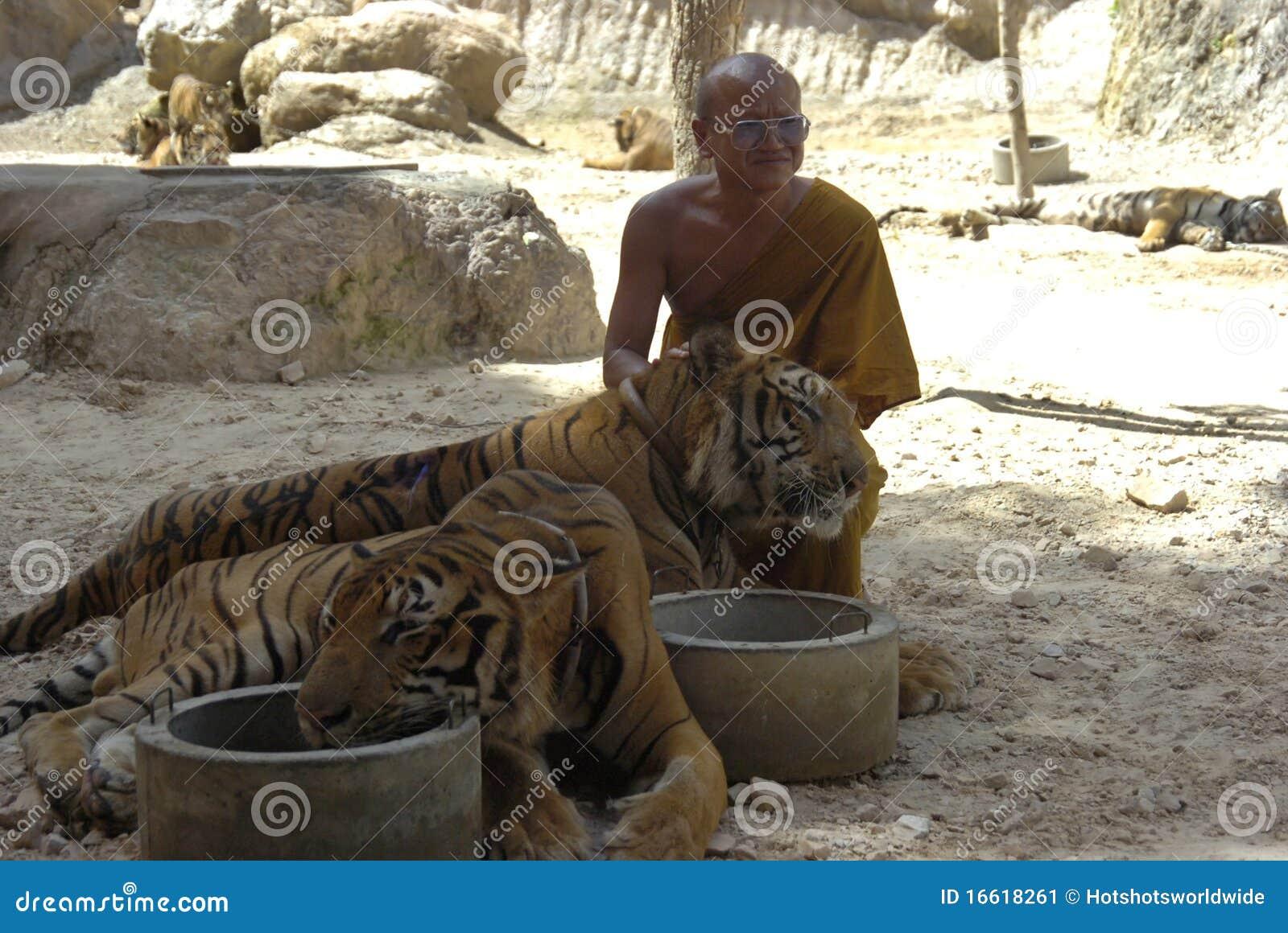 Monje budista con el tigre de bengala tailandia asia for Bengala asia