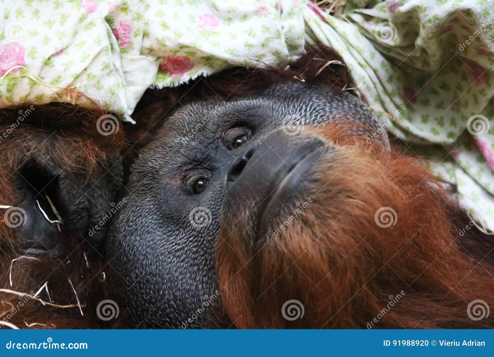 Monkey Animal Looking At You Baby Monkey Background Stock Photo