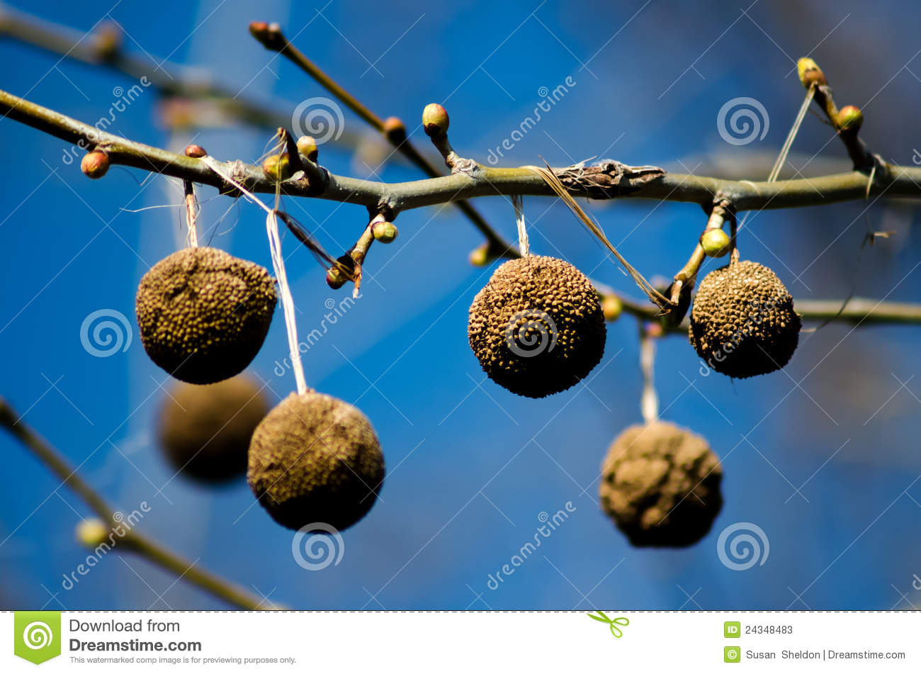 monkey balls stock photos   image 24348483
