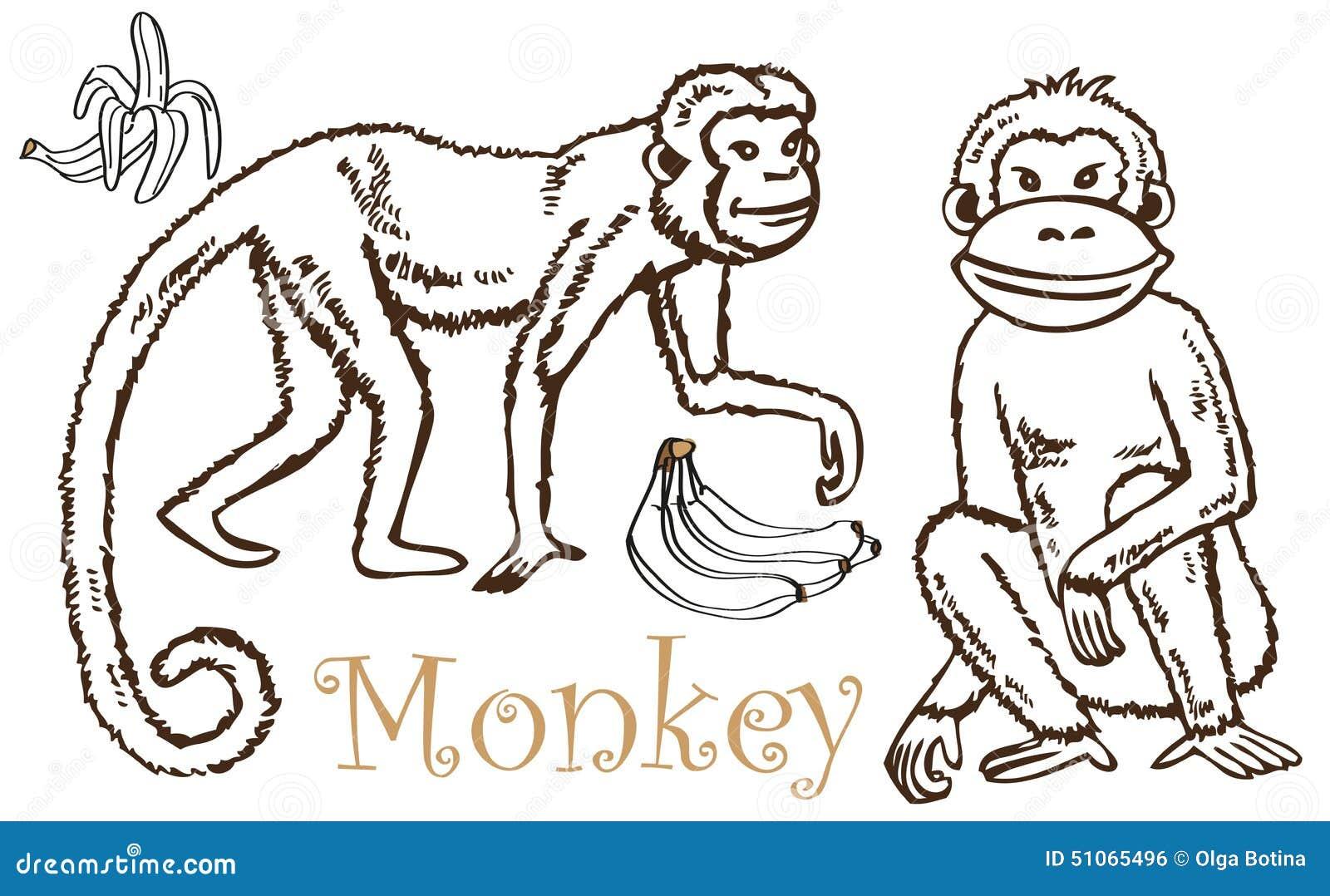 monkey and bananas drawing stock vector image 51065496