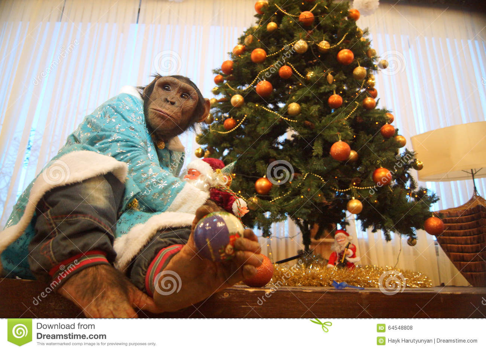 Monkey With Christmas Tree Stock Photo Image 64548808
