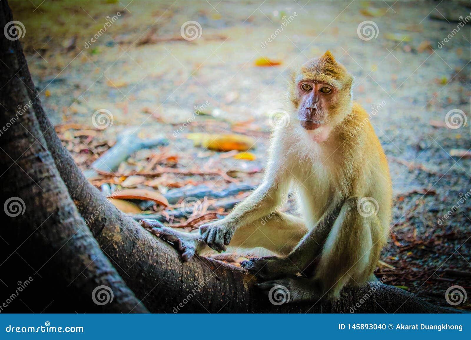 Monkey is eating a banana