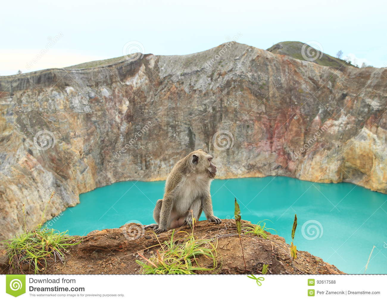 Monkey on edge of crater with lake Tin on Kelimutu