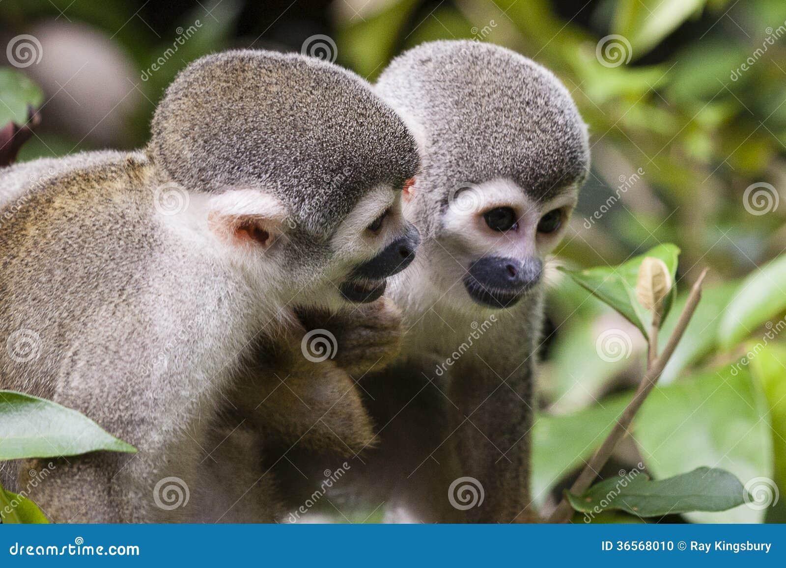 Monkey Friends Stock Photo - Image: 36568010