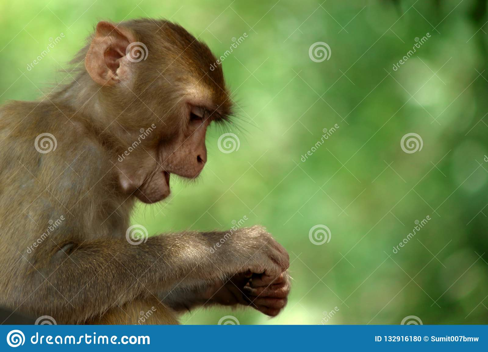 Monkey with a green background.