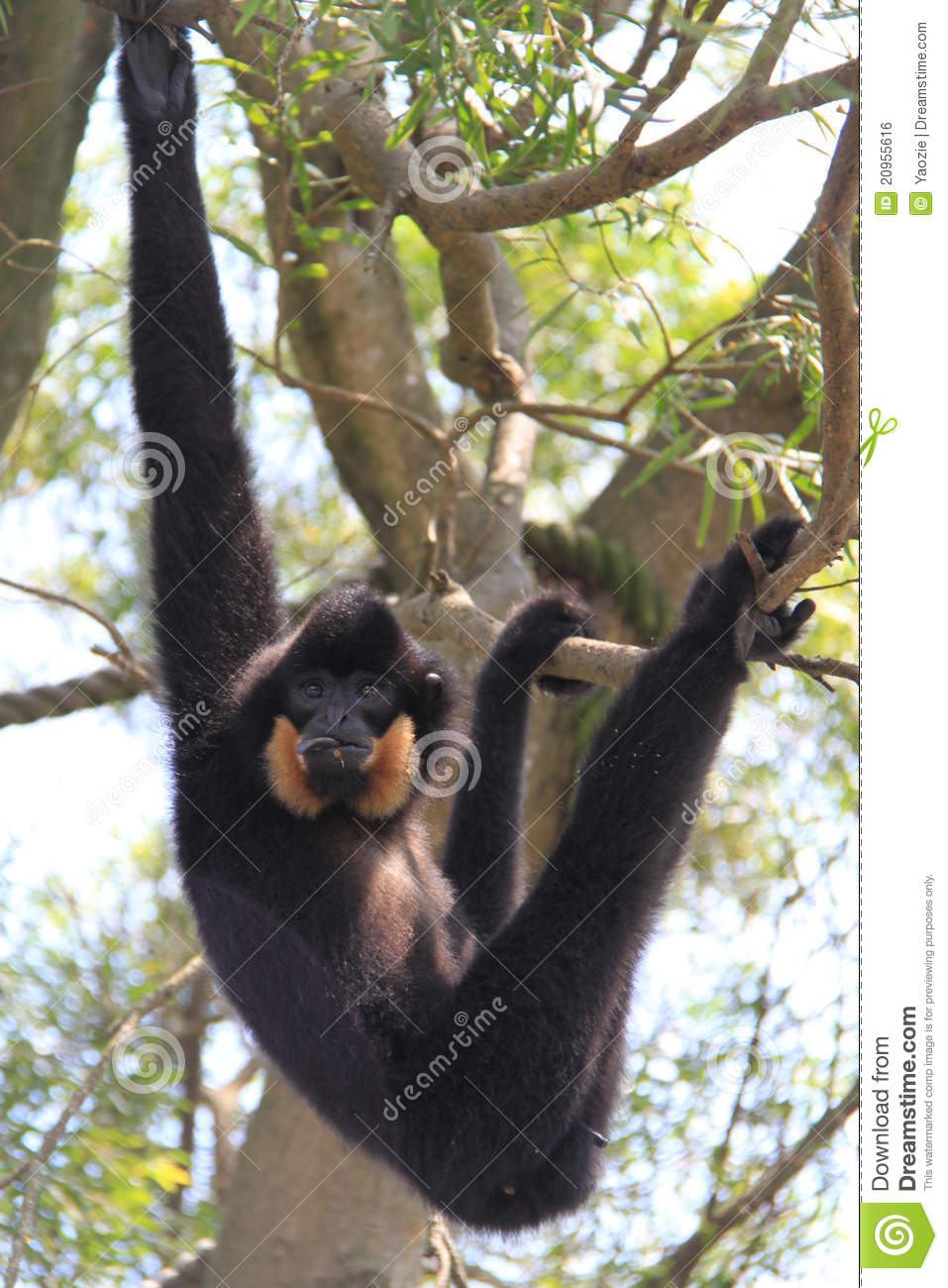 Monkey Hanging On A Tree Royalty Free Stock Image - Image: 20955616Western Desert Clipart