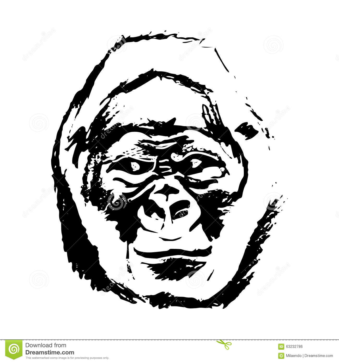 Gorilla Face Line Drawing : Monkey head graphics gorilla stock vector image