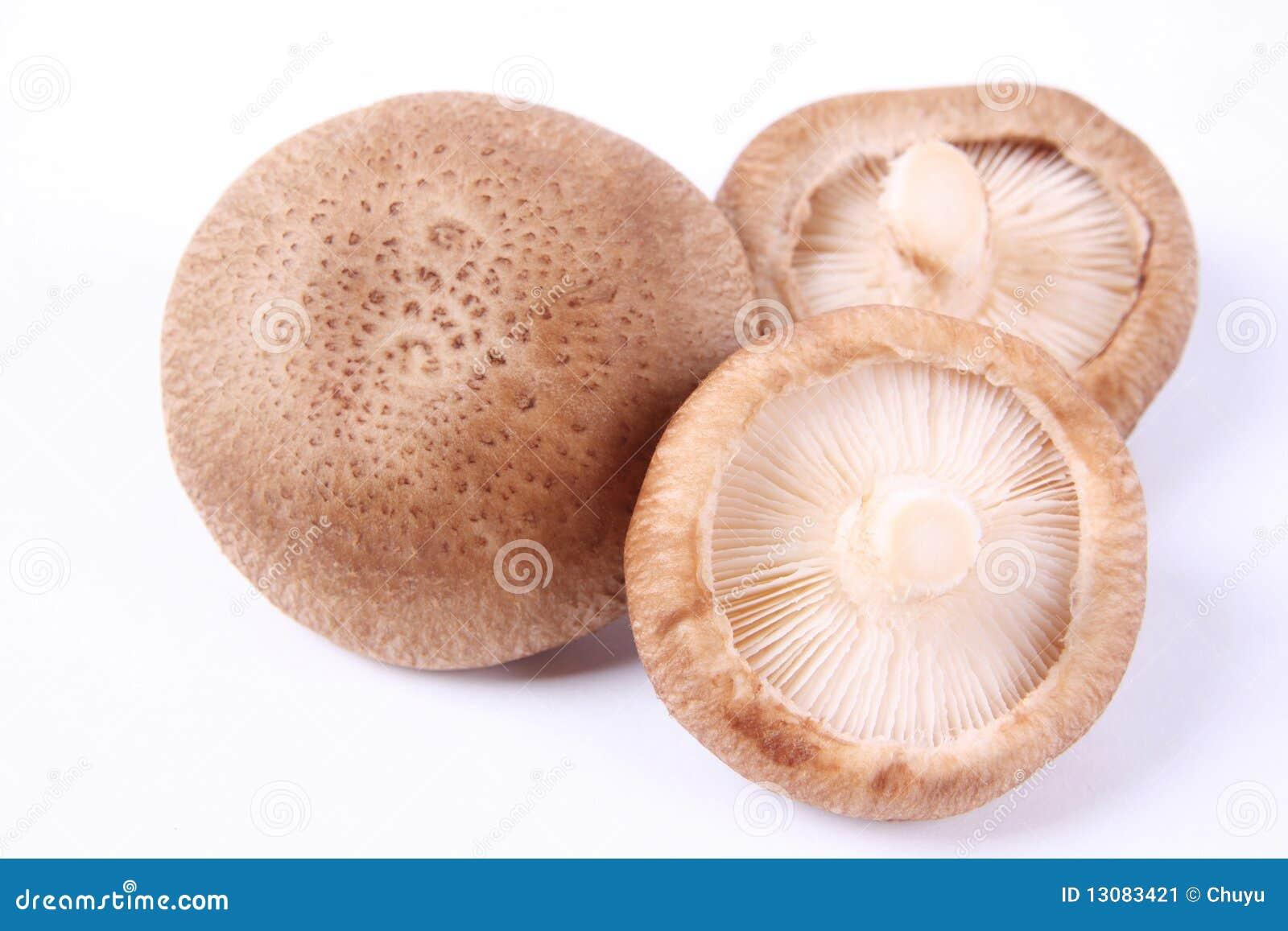 how to cook monkey head mushroom