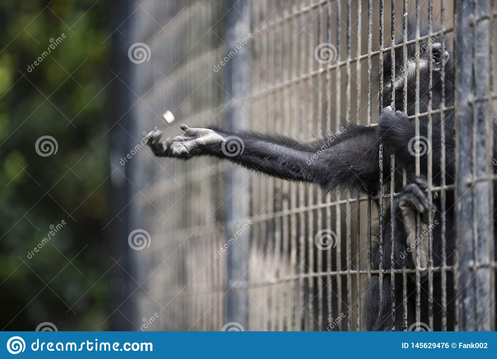 A MONKEY INSIDE GRILLE IN A ZOO