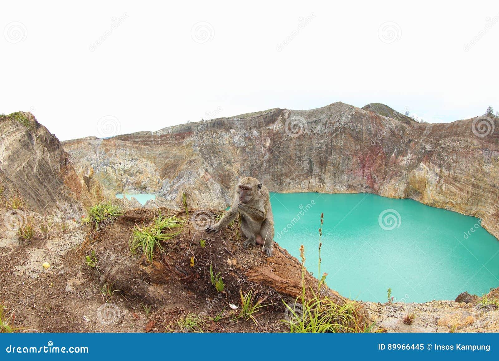 Monkey at Kelimutu Crater Lakes