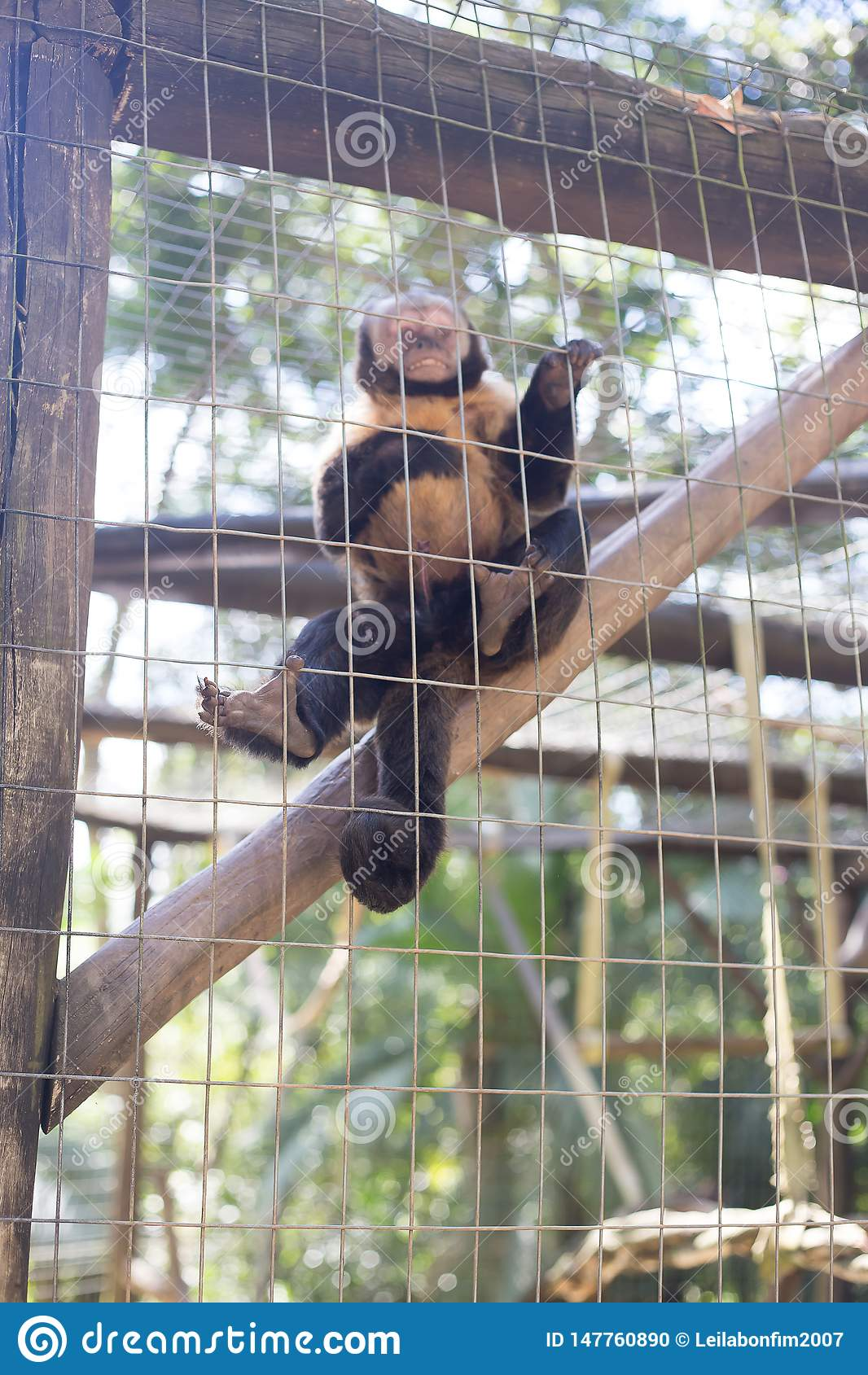 A monkey in the cage.