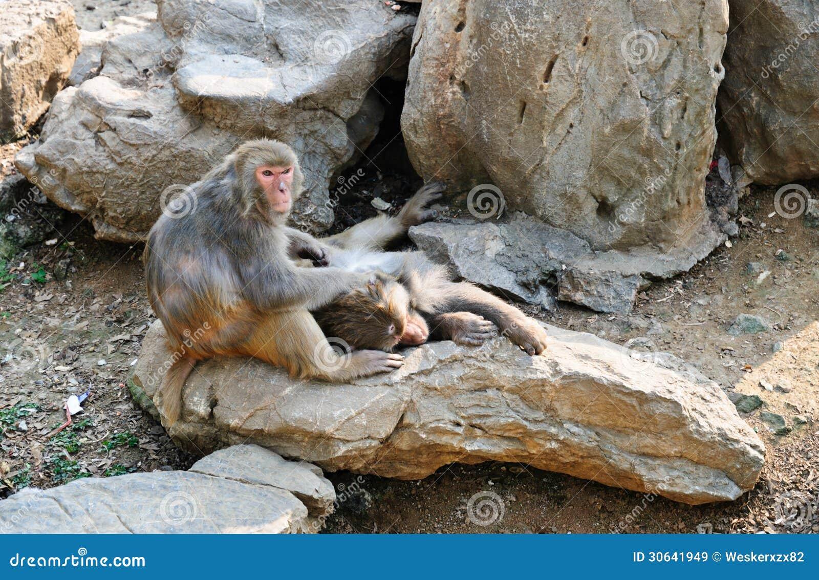 dream on monkey mountain pdf