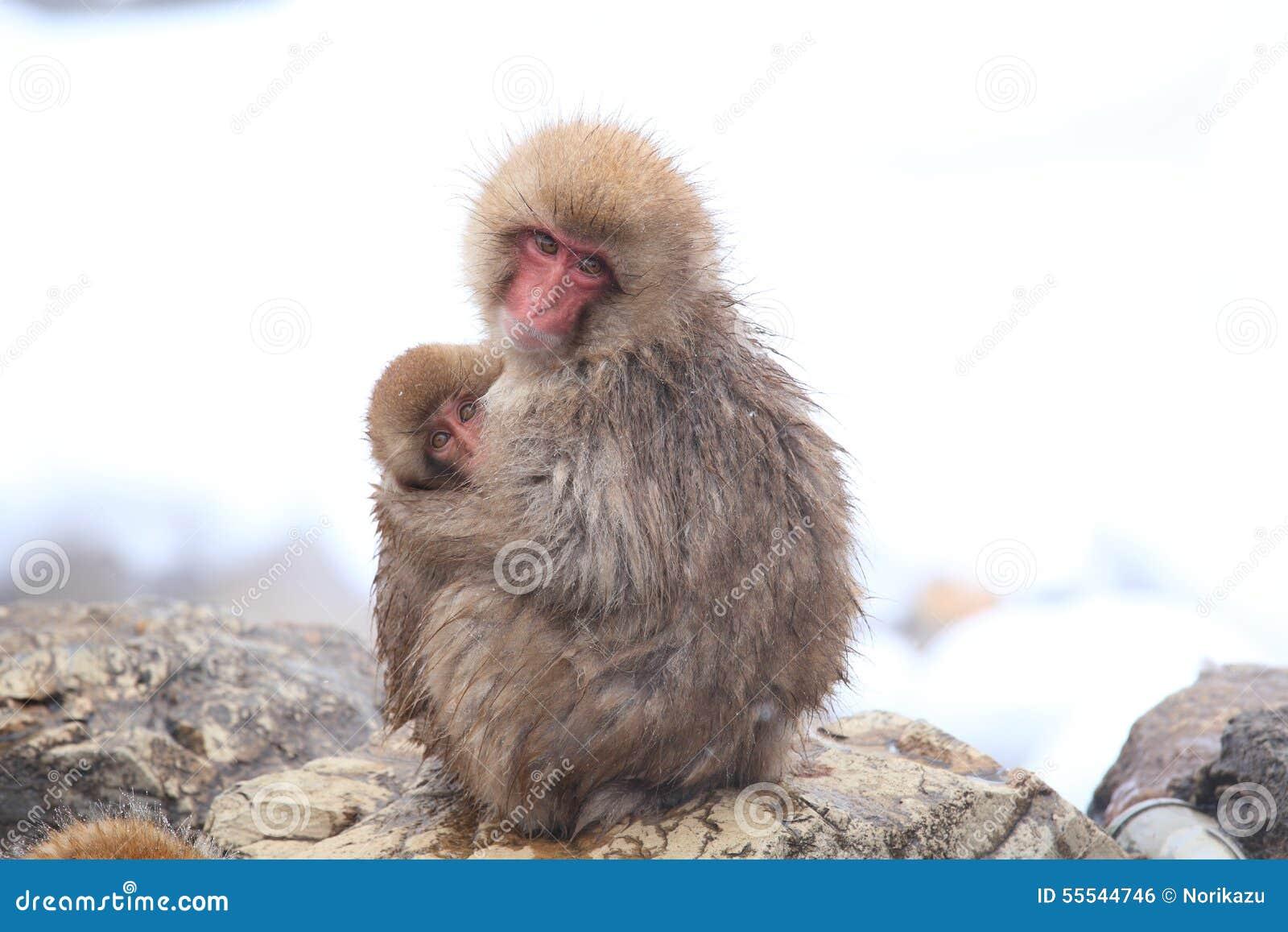 Baby monkey study mothers