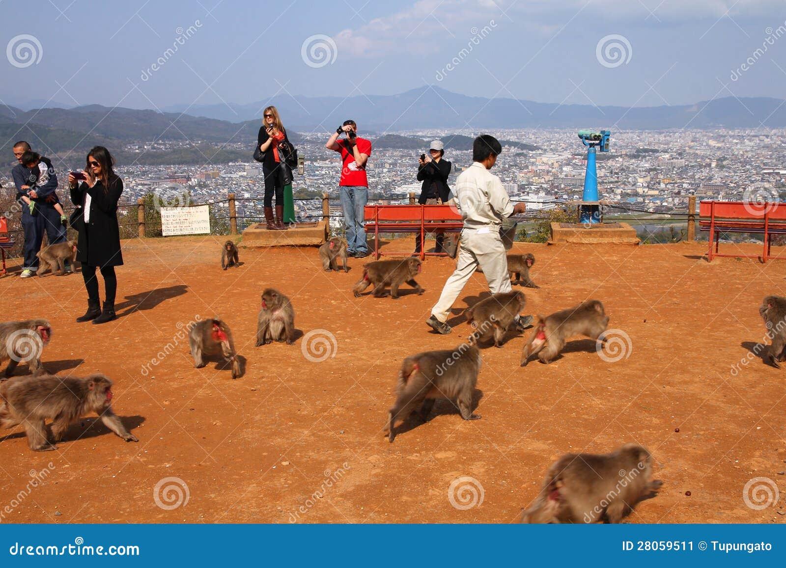 Monkey Park In Arashiyama, Kyoto Editorial Photo - Image: 28059511
