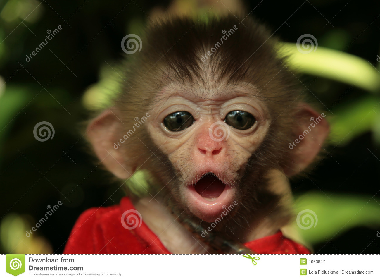 Download Monkey's baby stock image. Image of eyes, asia, hainan - 1063827