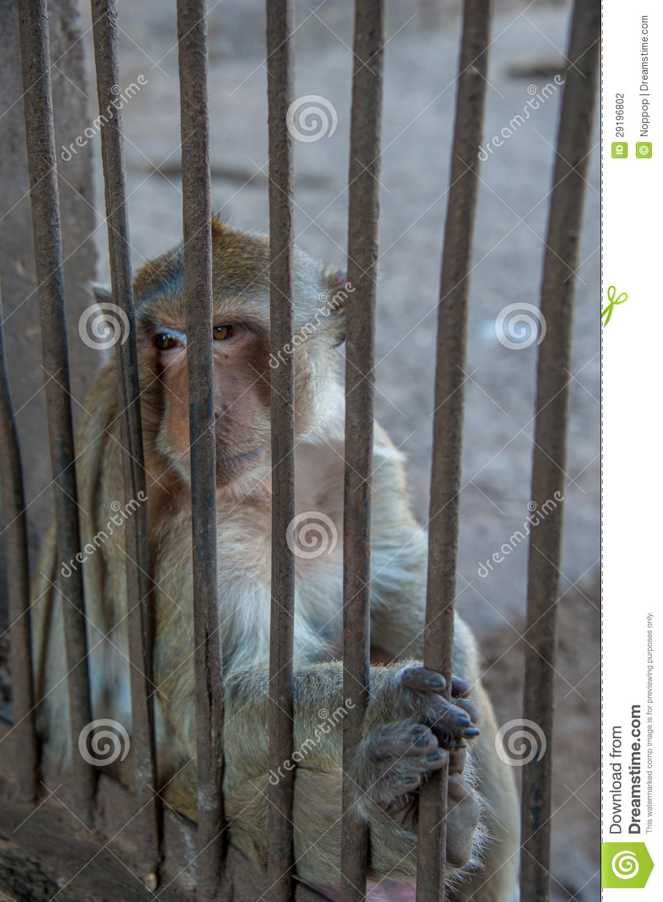 Monkey sit behind the cage