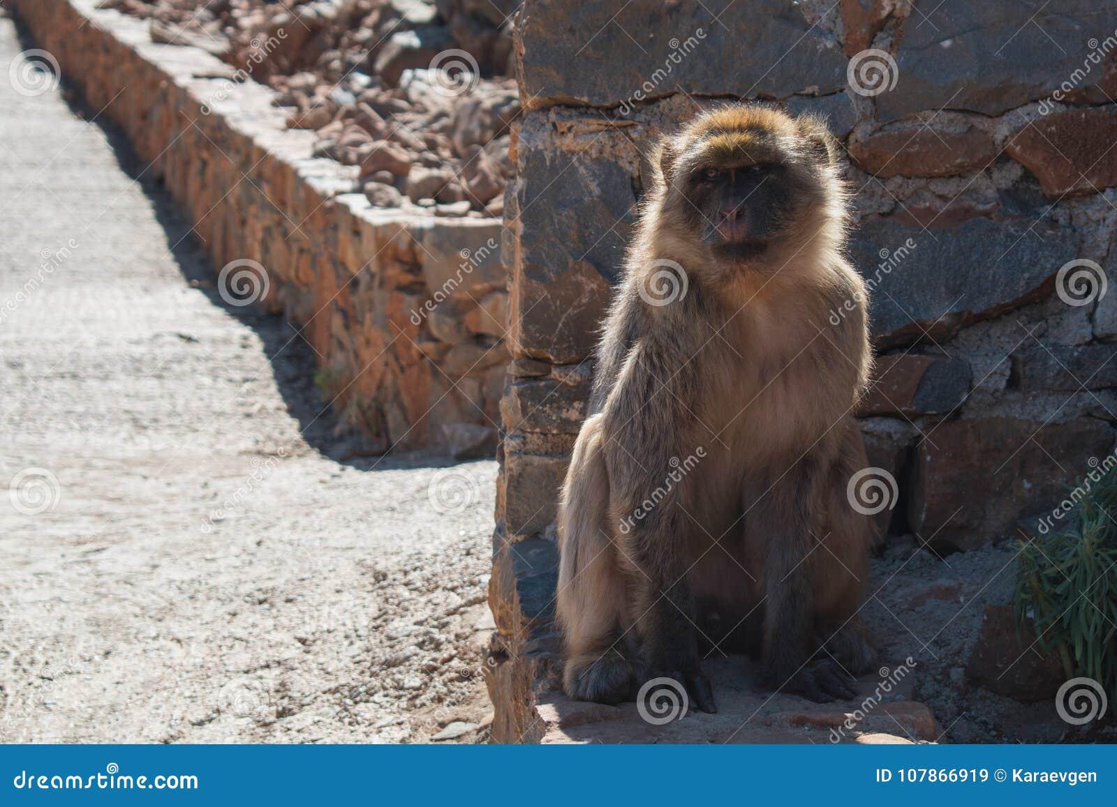 Monkey sits on a ground