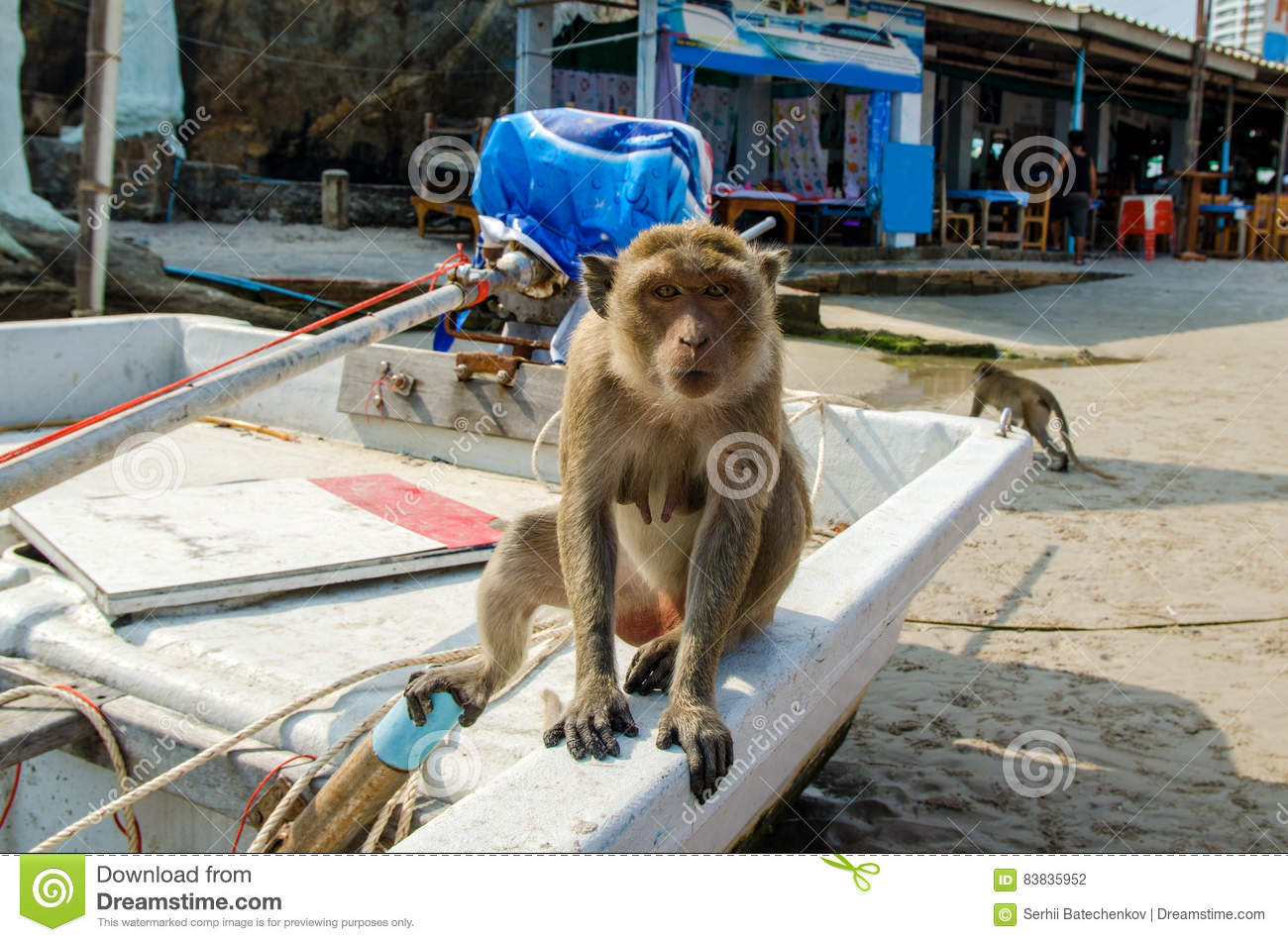 The monkey sitting in the boat on the beach on the background of cafe