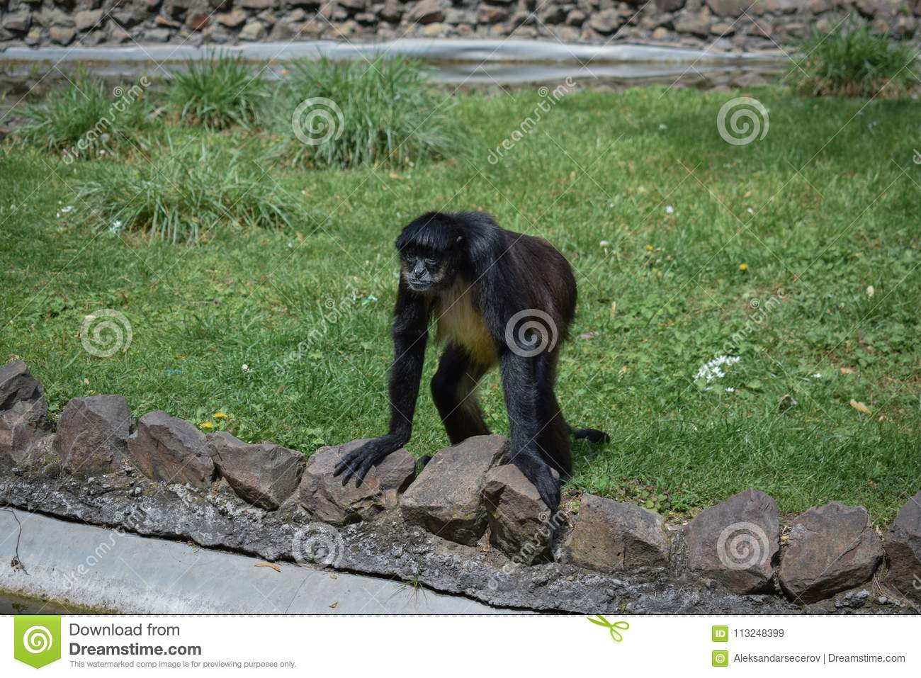 A monkey standing on a grass leaning against a fence of ponds.