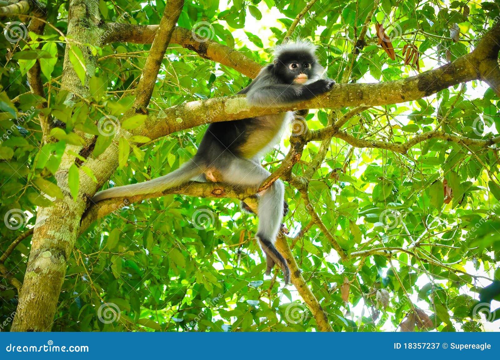 Monkey On The Tree Royalty Free Stock Photography - Image: 18357237