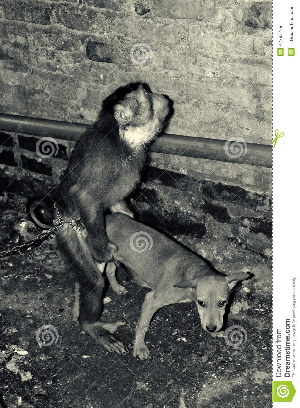Dog And Monkey Funny Video Download