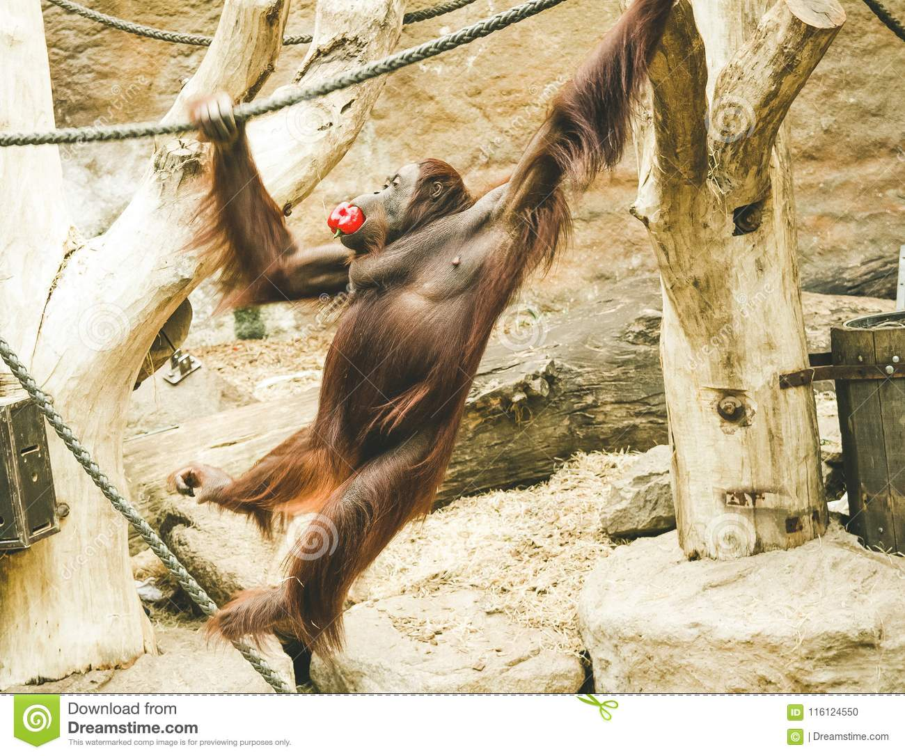 A jumping monkey in the zoo.