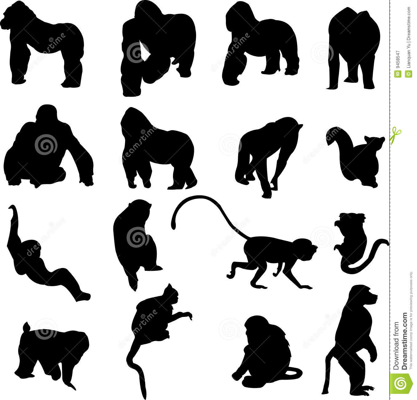 compare and contrast monkeys vs apes The difference between chimps and bonobos by madmin | aug bonobos remain the lesser known of the two apes and are often confused with chimps in contrast.