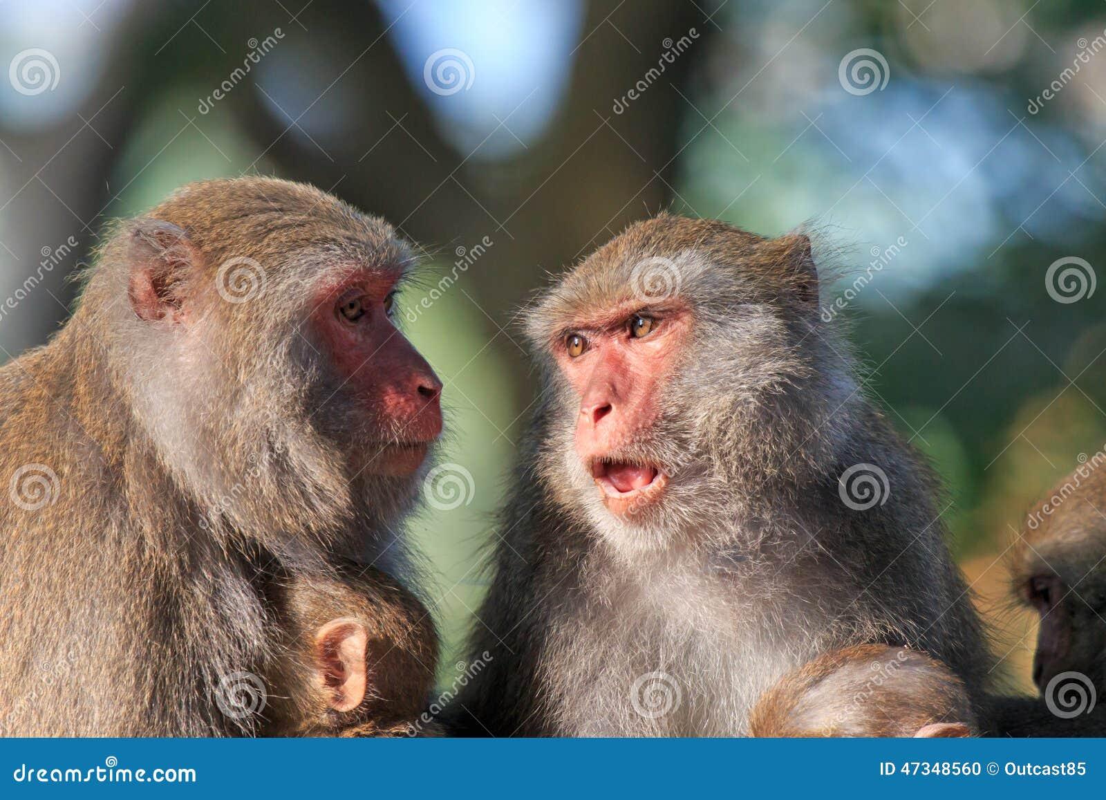 Mountain Monkeys