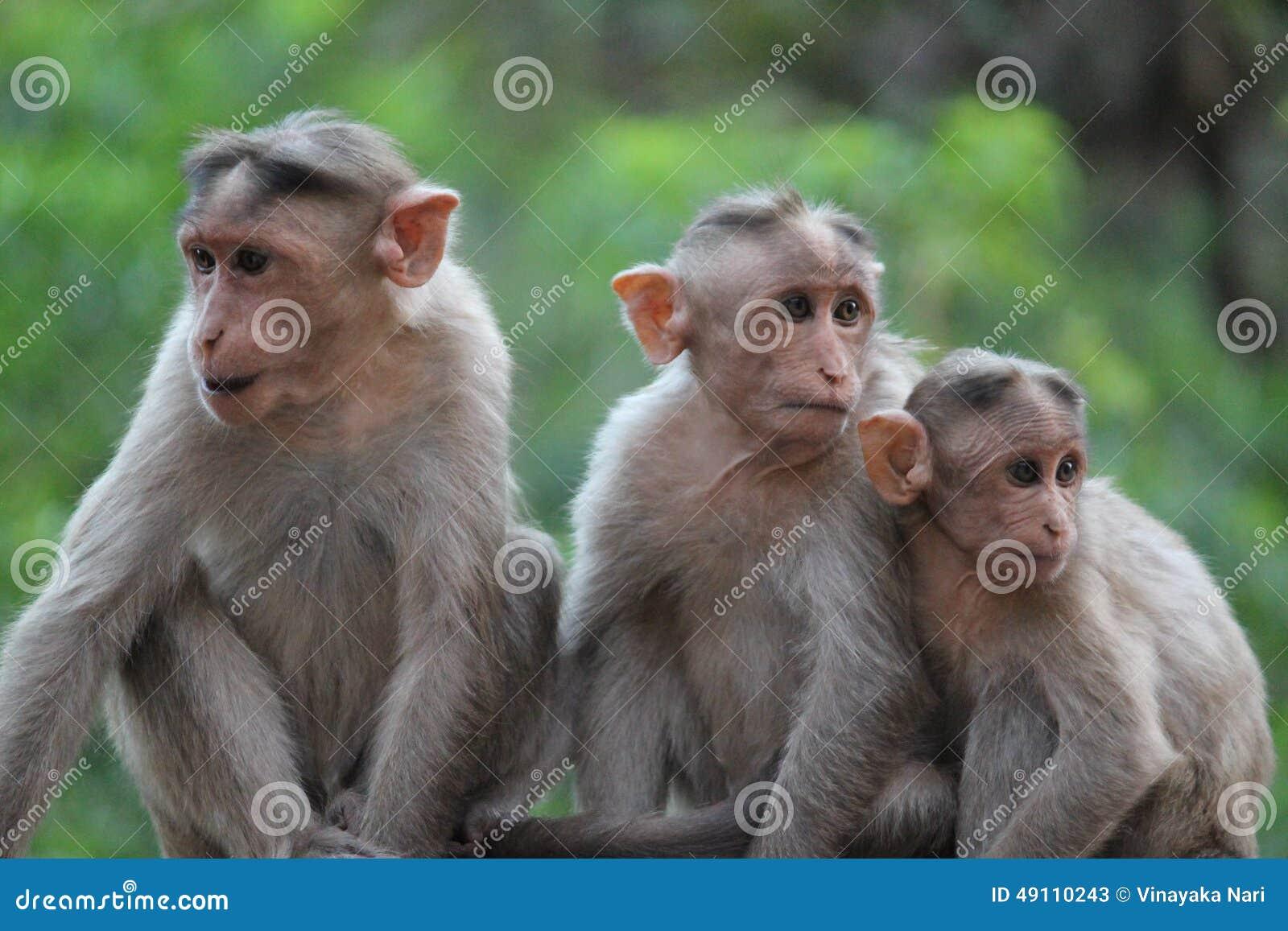 Monkeys team
