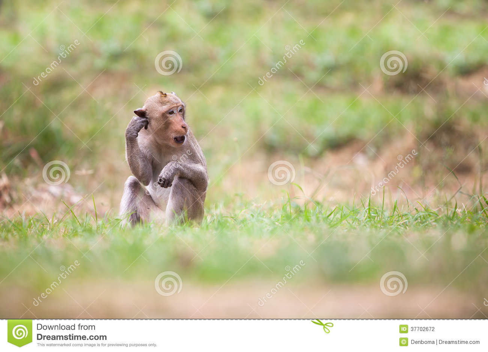Monkeys of Thailand