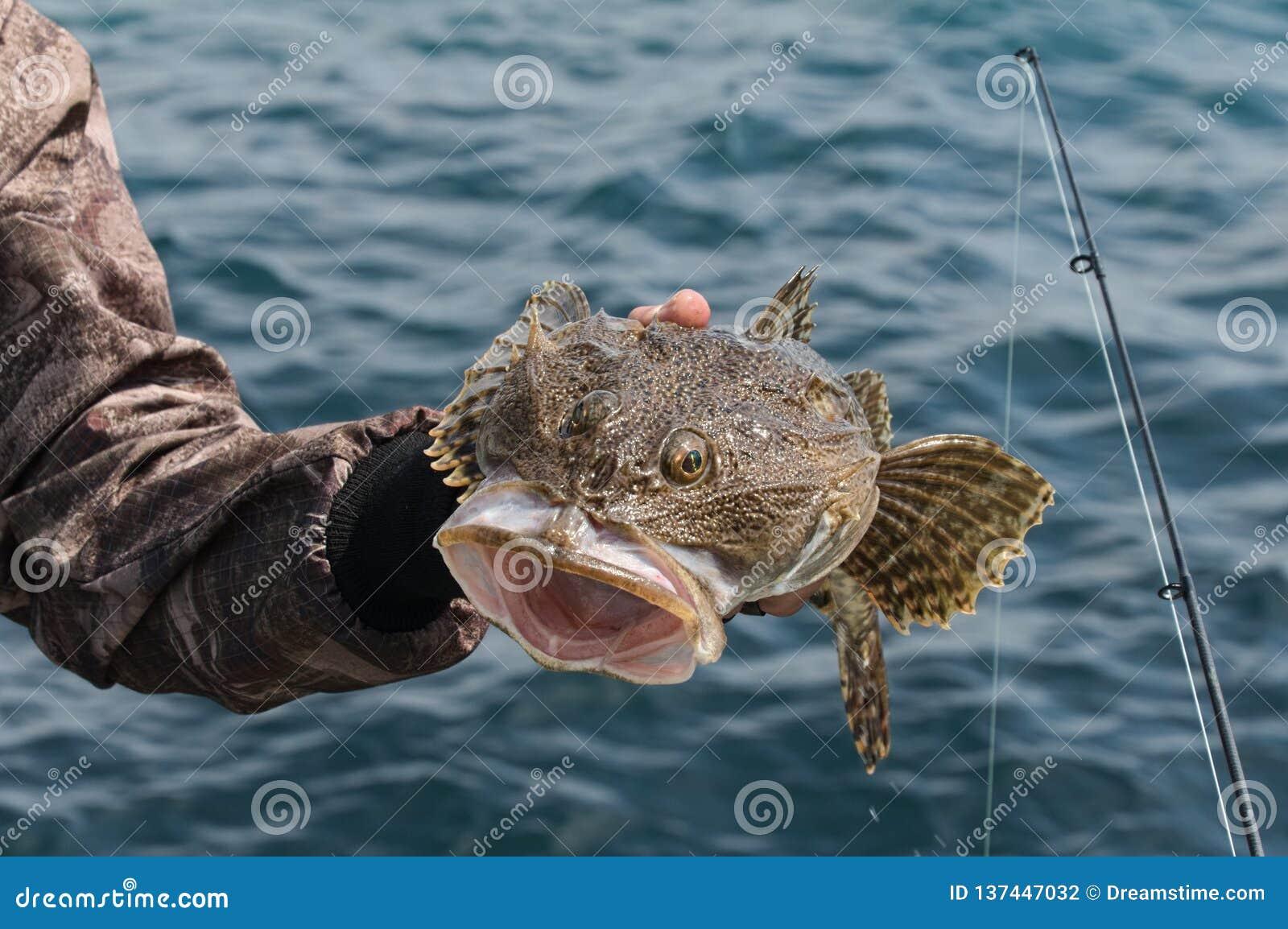 Monkfish in het overzees