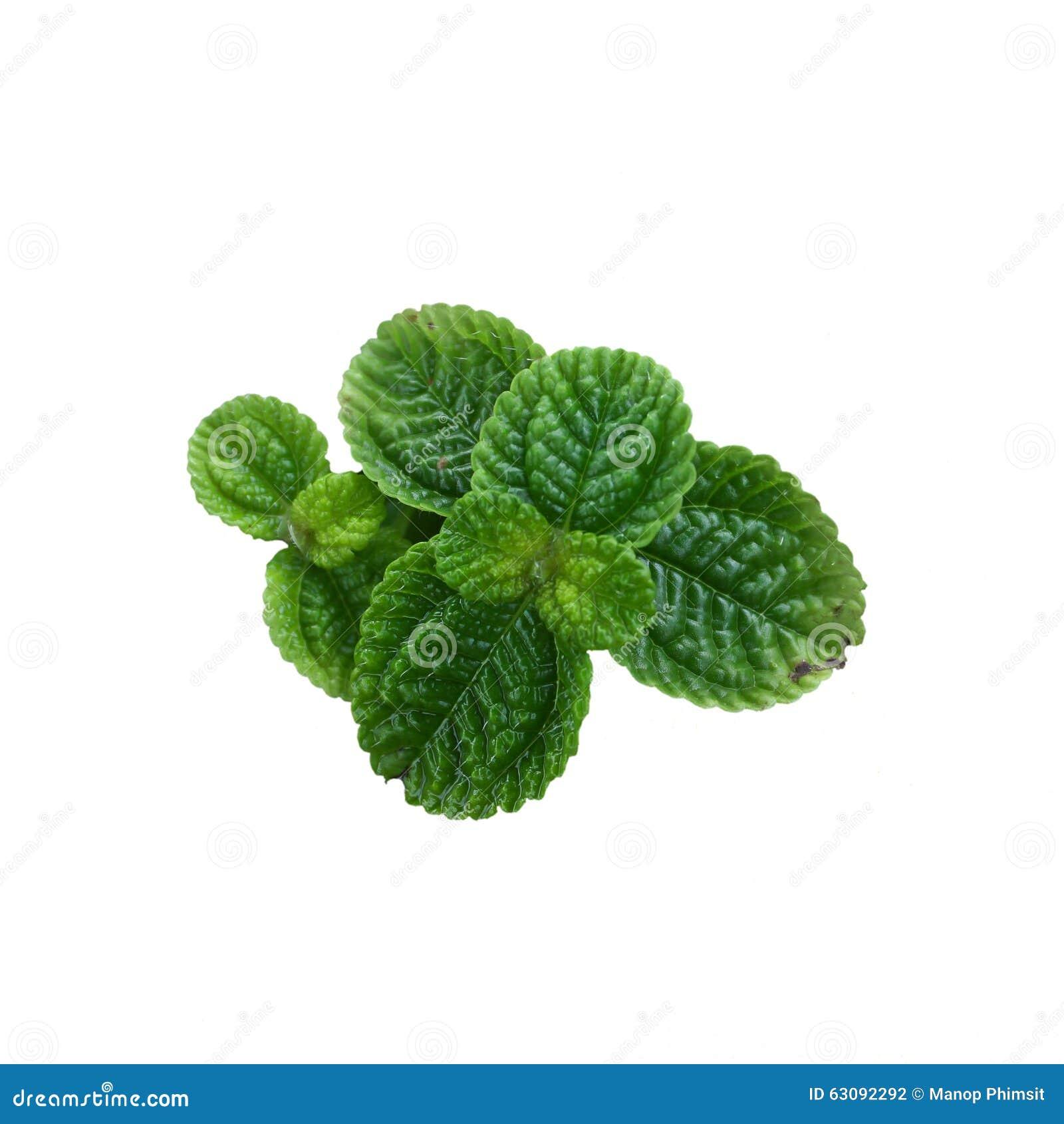 Download Monnayages photo stock. Image du herbal, jardin, normal - 63092292