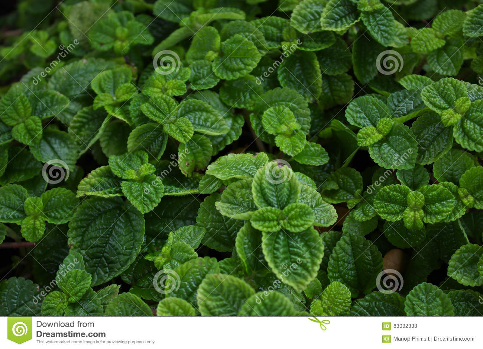 Download Monnayages photo stock. Image du nourriture, herbe, jardin - 63092338