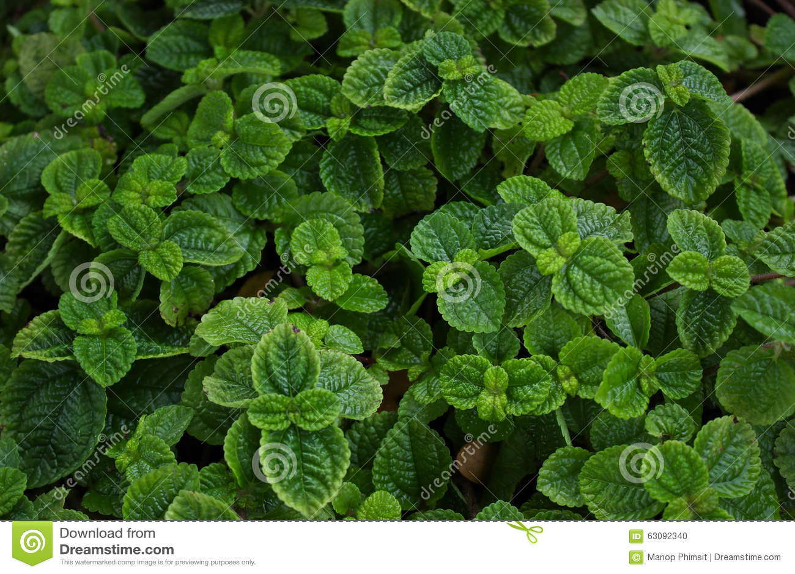 Download Monnayages photo stock. Image du nourriture, herbal, frais - 63092340