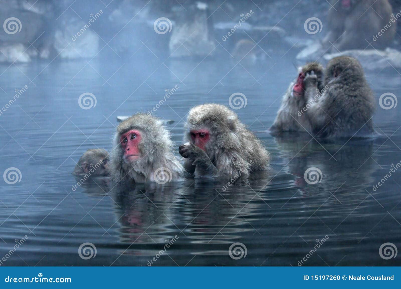 Mono de la nieve en Jigokudani cerca