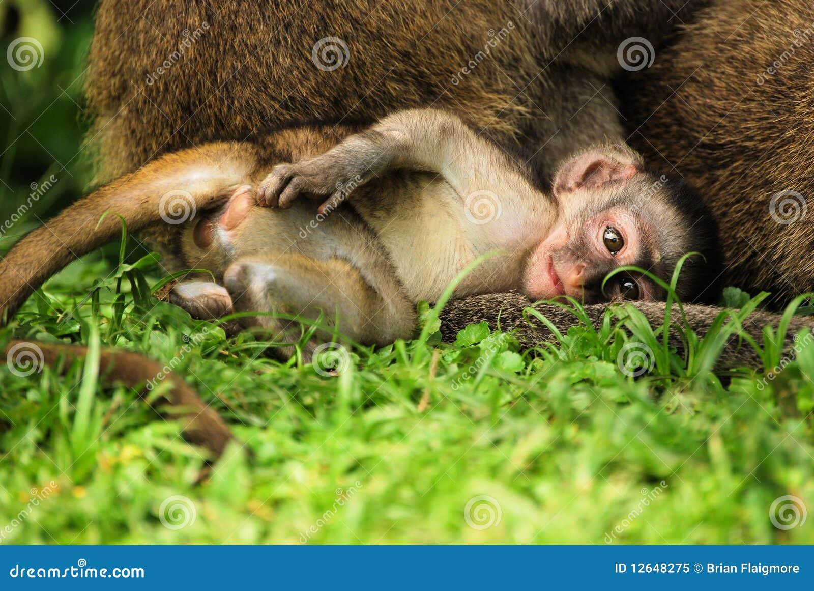 Mono del bebé