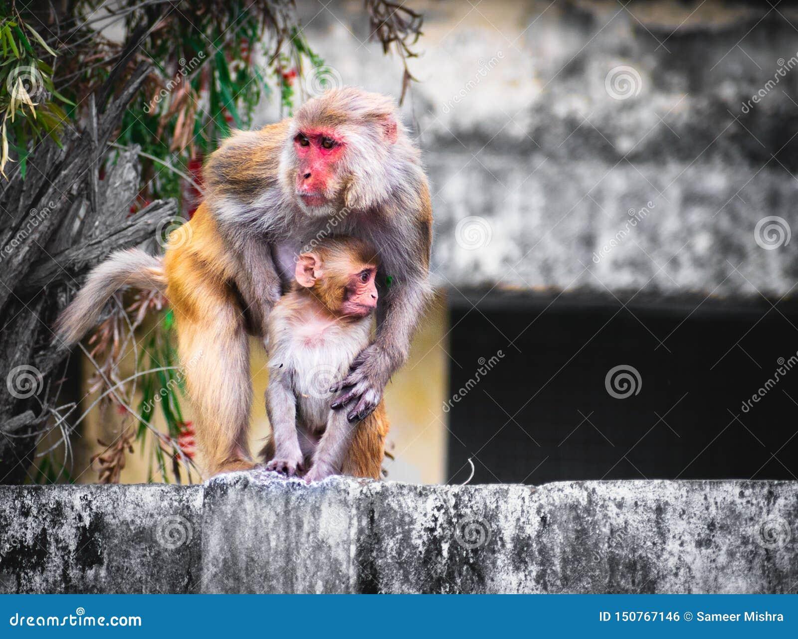 Mono del bebé de la tenencia del mono en fondo de la pared