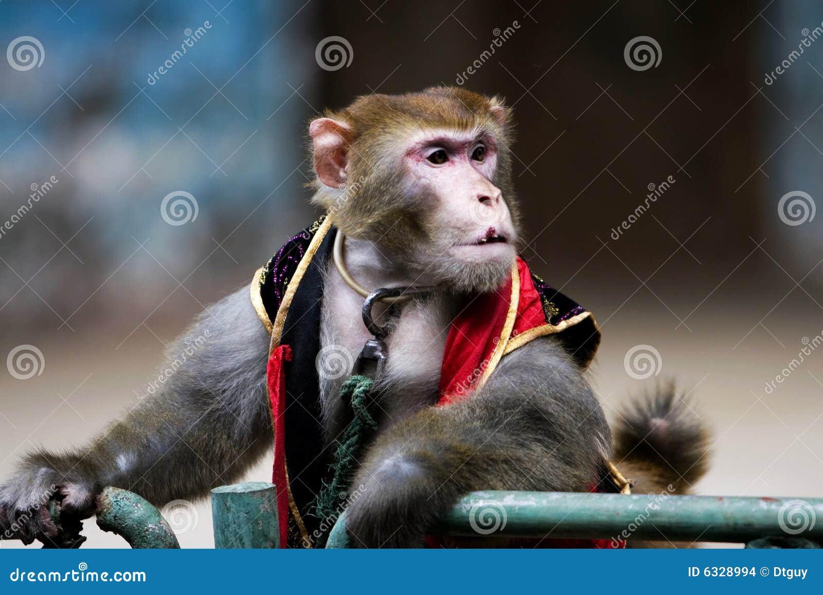 mono del circo foto de archivo imagen de mono humano 6328994. Black Bedroom Furniture Sets. Home Design Ideas