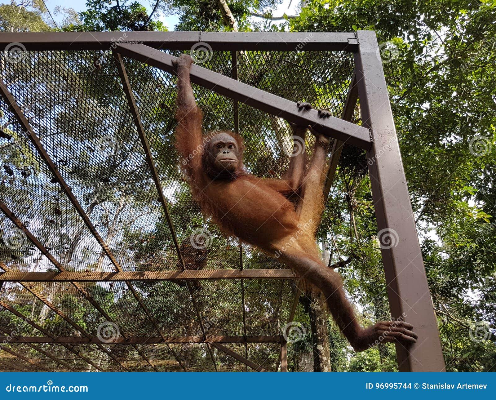 Mono en la gatería