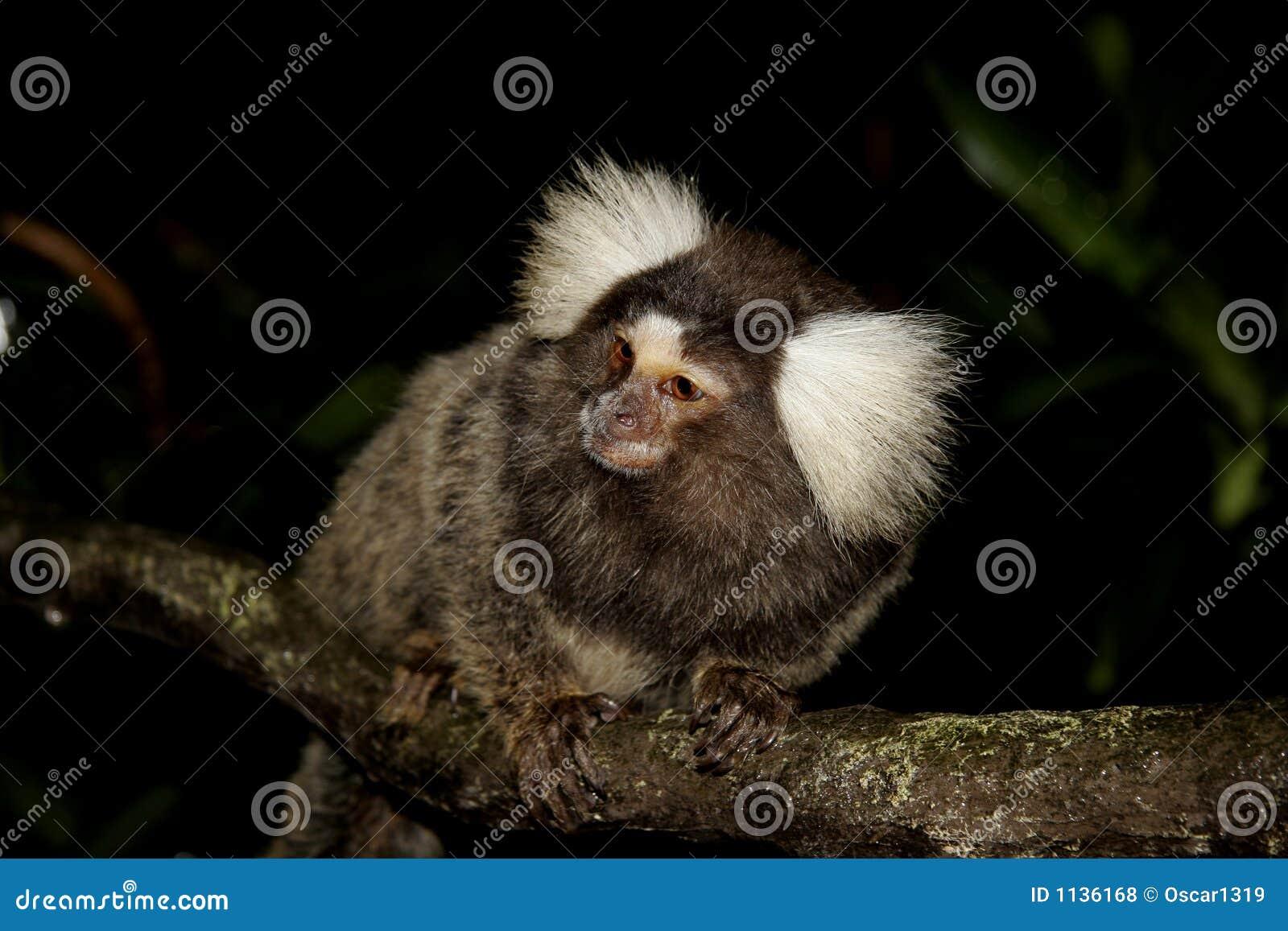 Mono en una ramificación de árbol
