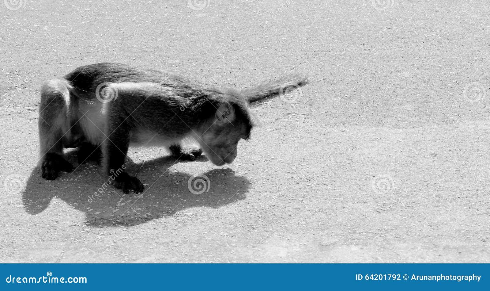 Mono que come en la tierra