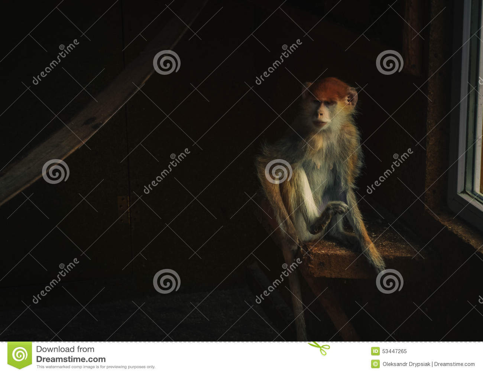 Mono que se sienta en el cuarto