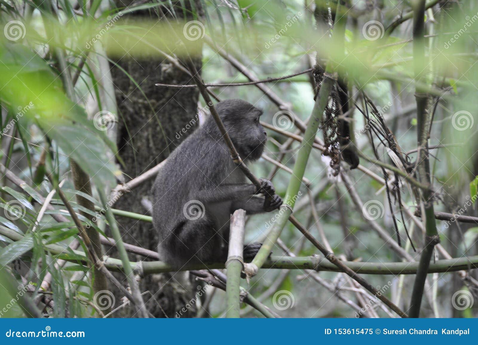 Mono solo que se sienta entre los arbustos