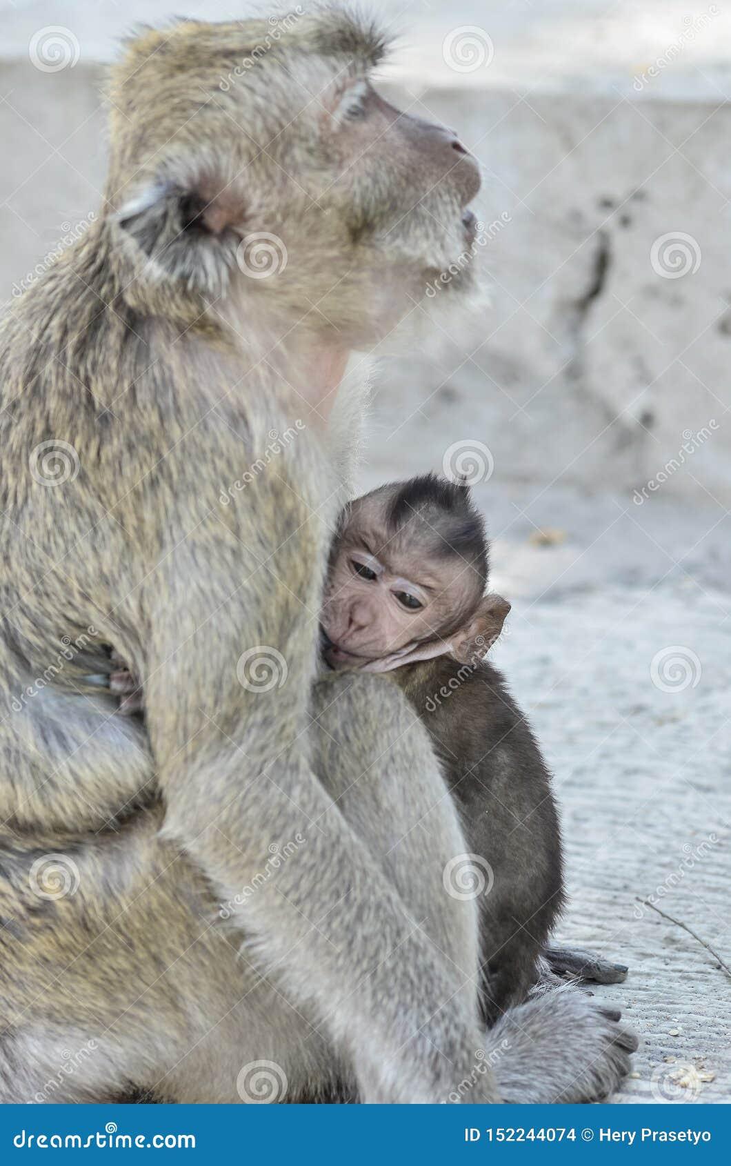 Mono y su vida