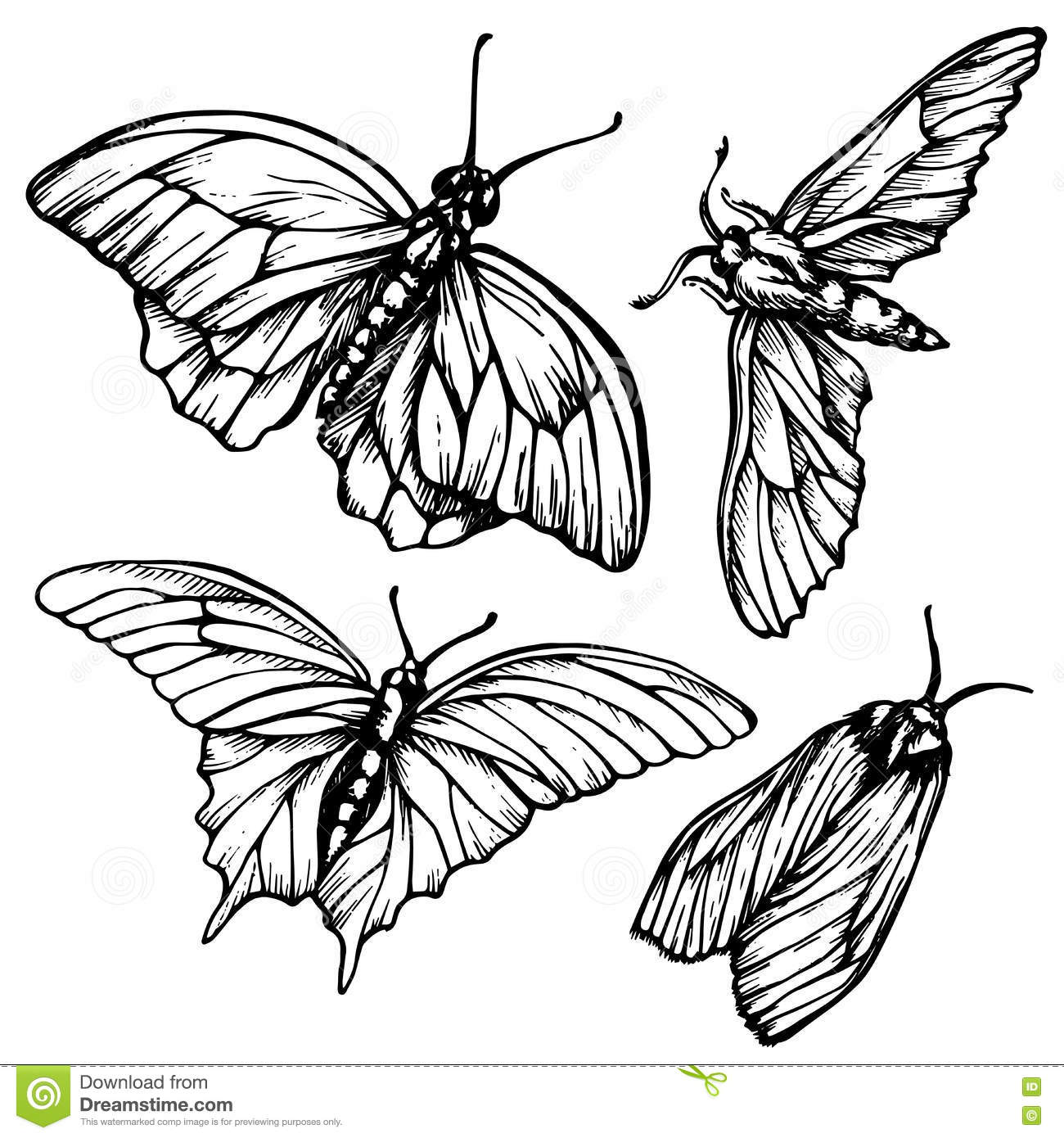 Monochrome Black And White Seamless Background With Butterflies Elegant Elements For Design Can