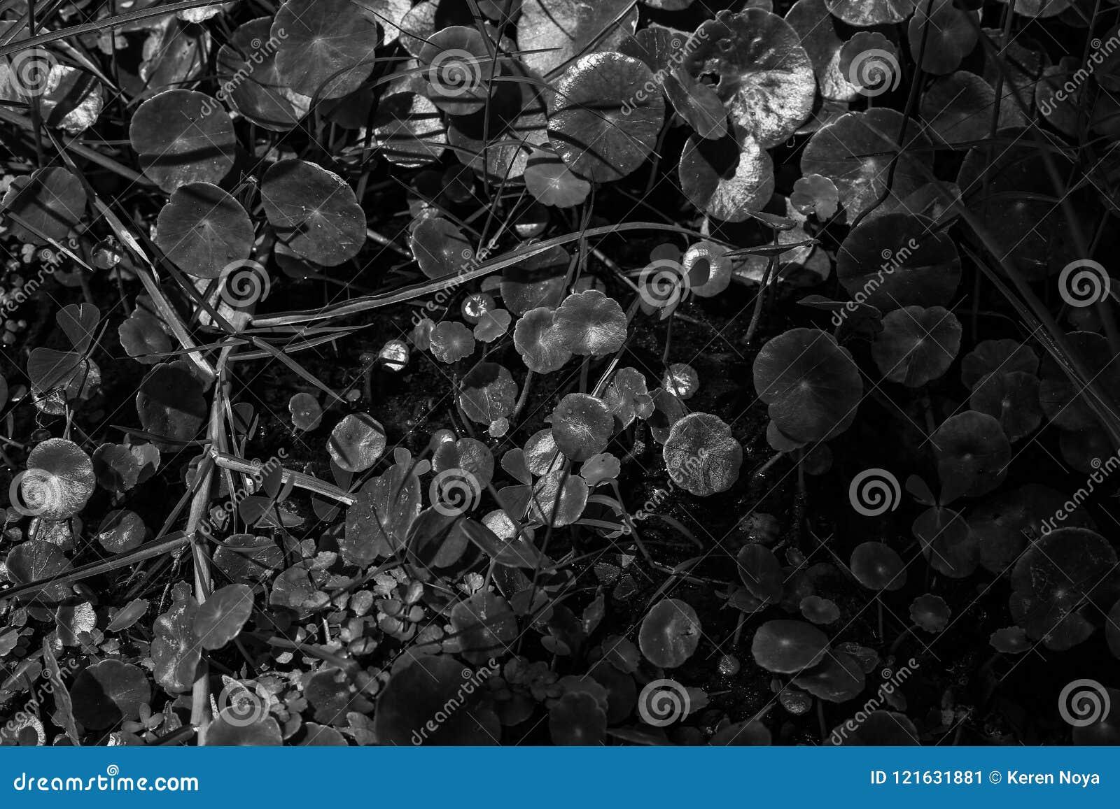 Download 4000+ Wallpaper Black White Keren  Paling Keren