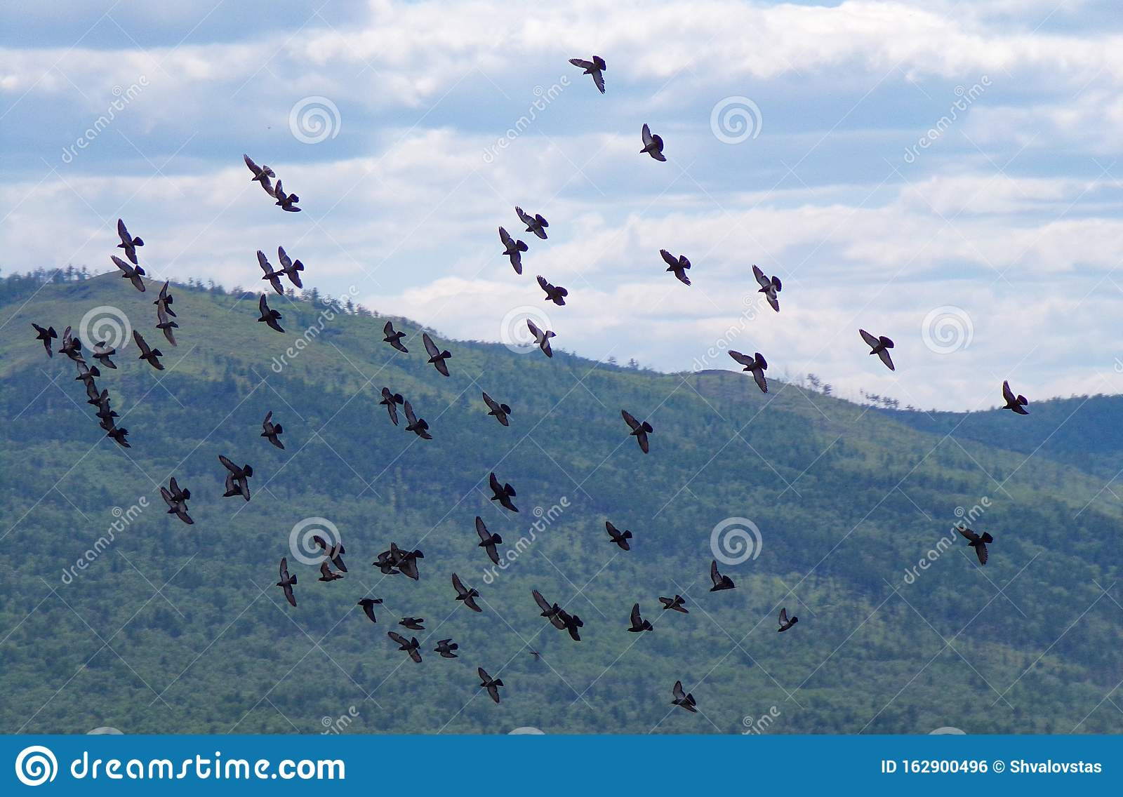 Monog Pigeons Gathered In A Flock And Fly Around The City Stock Photo Image Of Blue Formation 162900496